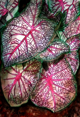 caladiums tropical plant painting