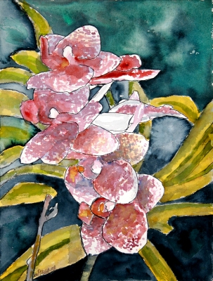 """Hybrid orchid flower watercolor painting"" flower watercolor painting 12 x"