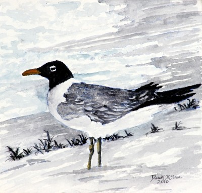 sea gull paintings