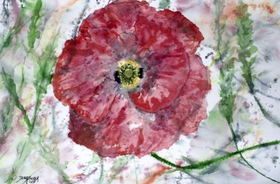 poppy flower painting
