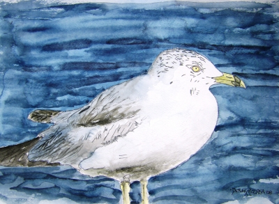 seagull bird painting
